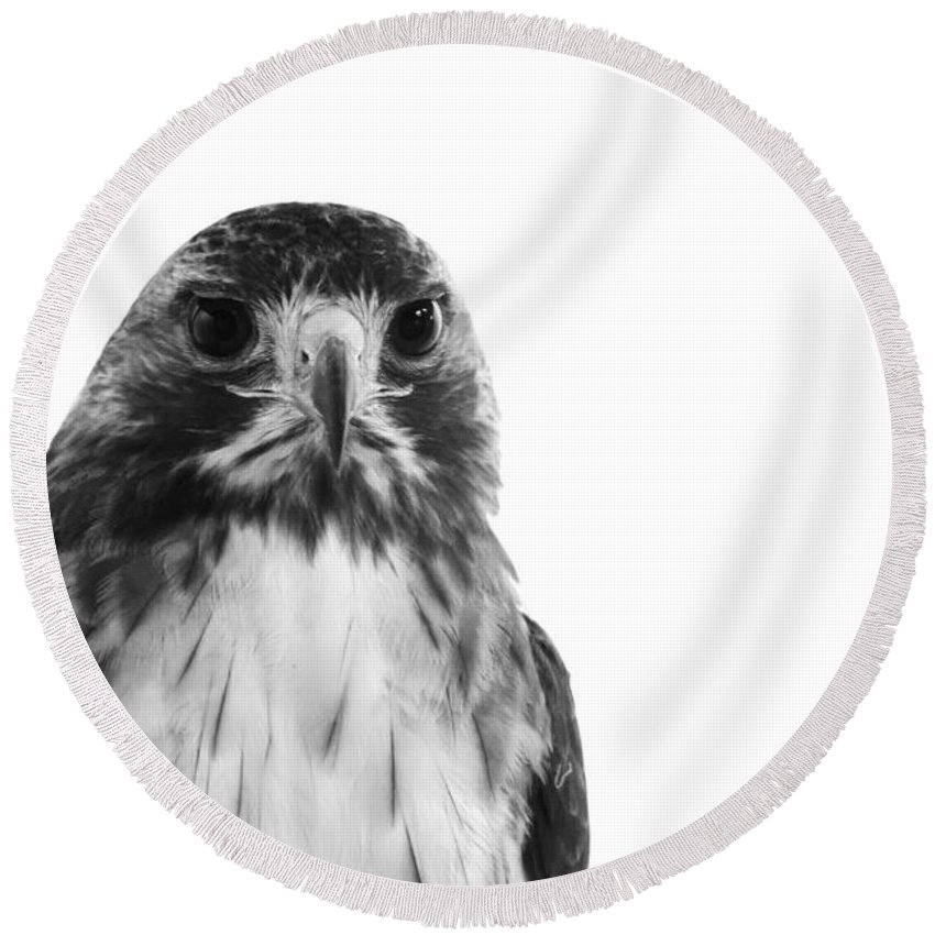 Hawk Round Beach Towel featuring the photograph Hawk On White Background by Stephanie McDowell