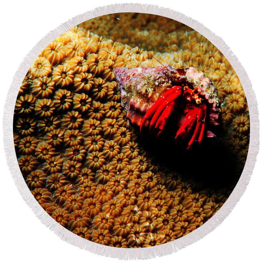 Hermit Crab Round Beach Towel featuring the photograph Hermit Crab On Coral by Mike Nellums