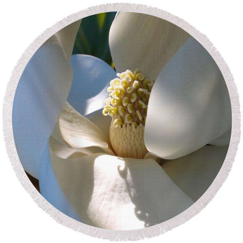 Magnolia Round Beach Towel featuring the photograph Hidden Magnolia by Carol Groenen