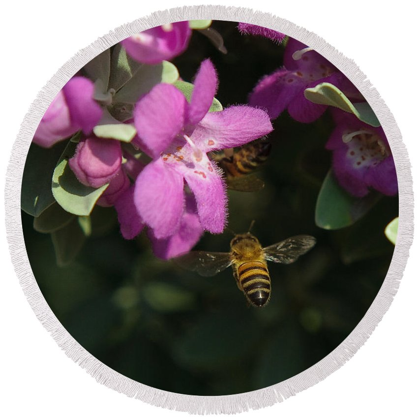 Backyard Round Beach Towel featuring the photograph Honey Bees On Sage 3 by Sean Wray