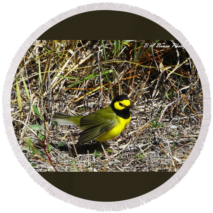 Hooded Warbler Round Beach Towel featuring the photograph Hooded Warbler by Barbara Bowen
