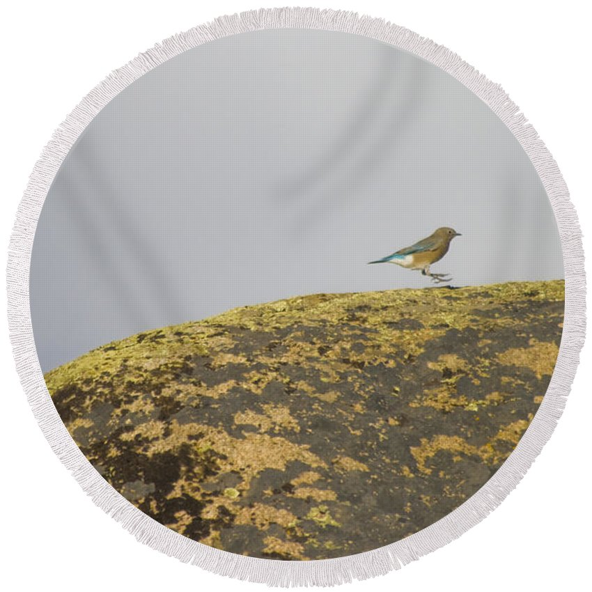 Blue Bird Round Beach Towel featuring the photograph Hopping Blue Bird by Crystal Heitzman Renskers