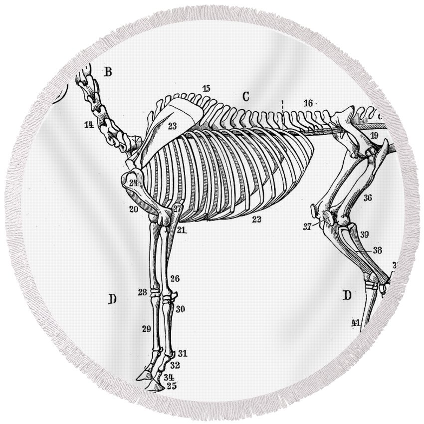 Horse: Bone Structure Round Beach Towel for Sale by Granger