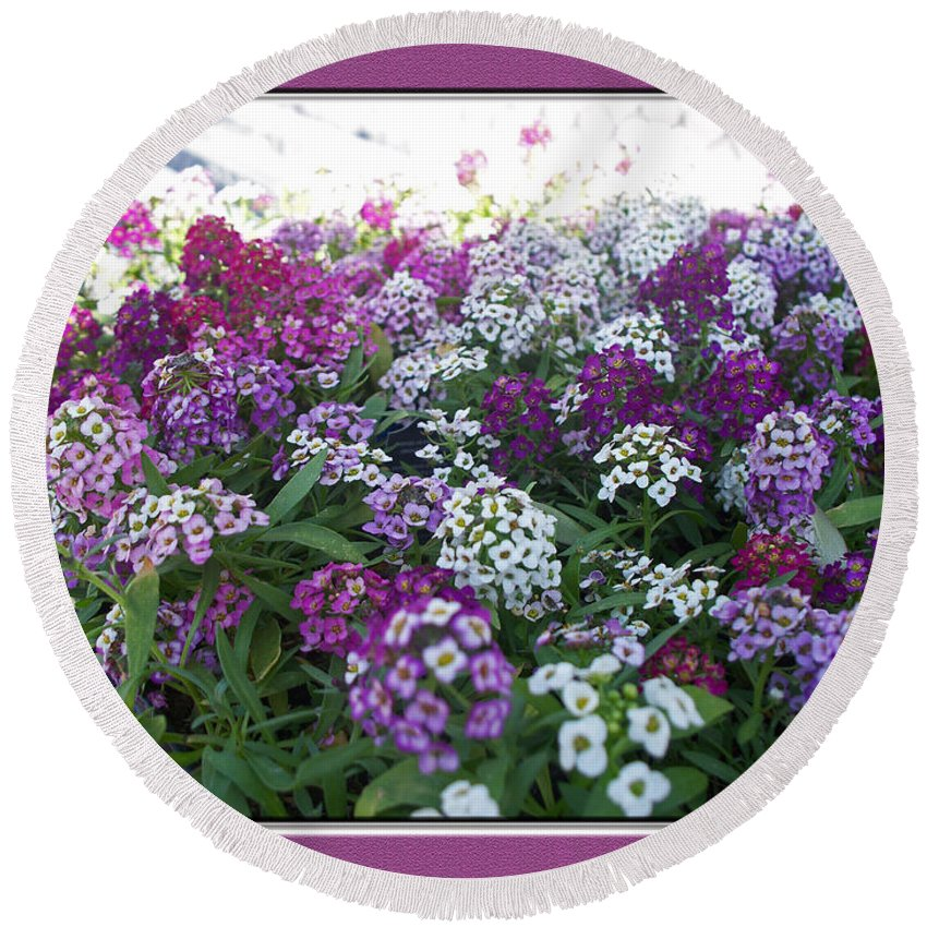 Nature Round Beach Towel featuring the photograph Hues Of Purple Phlox by Debbie Portwood