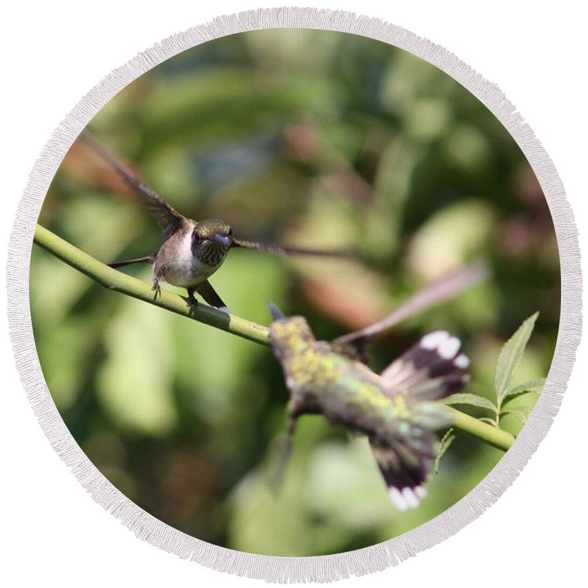 Hummingbird Round Beach Towel featuring the photograph Hummingbird - You Have Done It Now by Travis Truelove