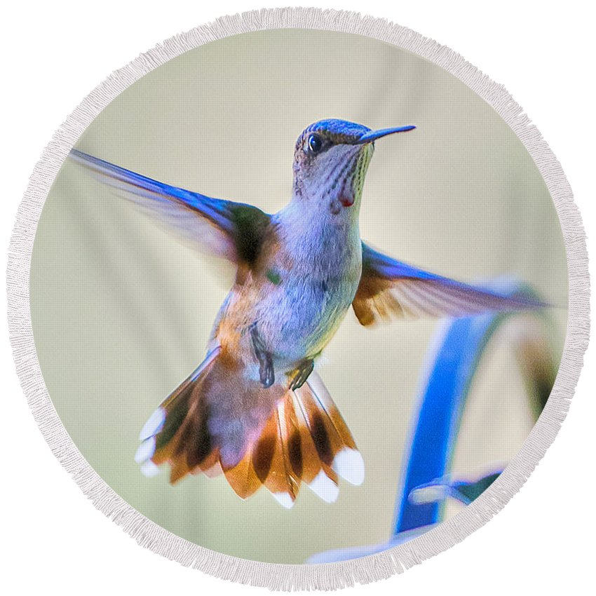 Bird Round Beach Towel featuring the photograph Hummingbird At The Feeder by Shirley Tinkham