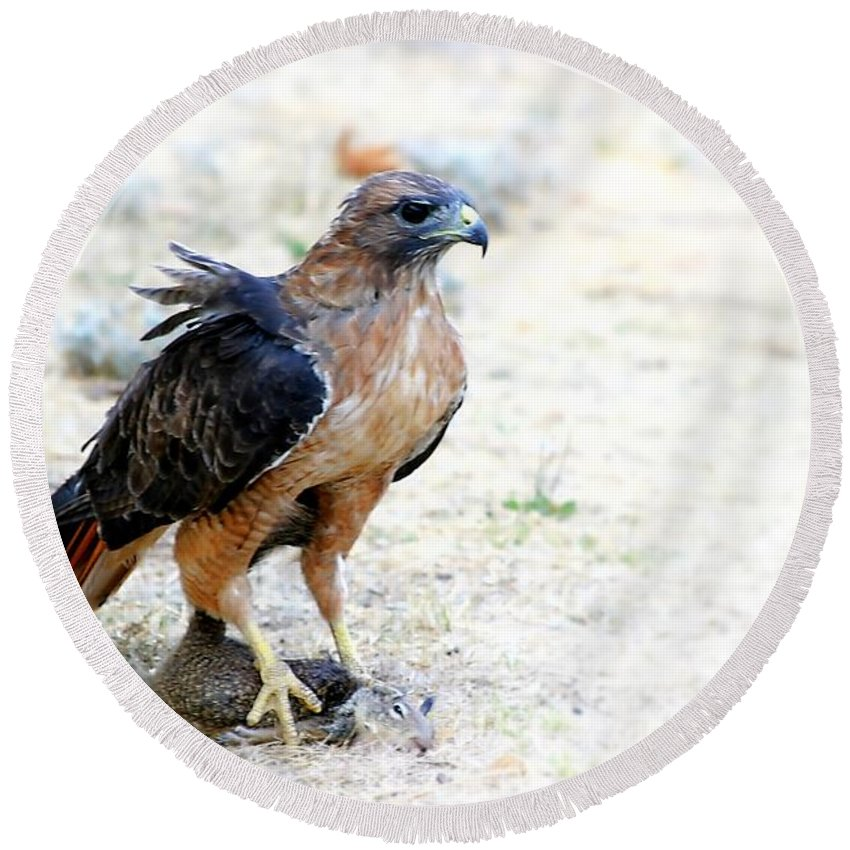 Animal Round Beach Towel featuring the photograph Hungry Red Teiled Hawk by Henrik Lehnerer