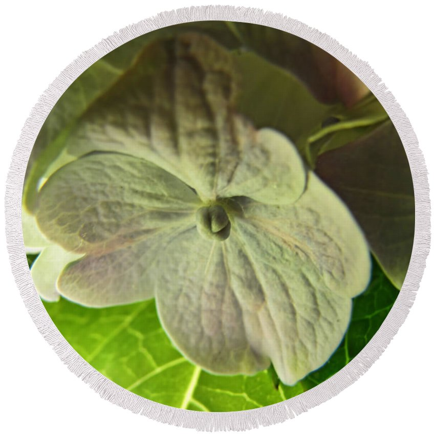 Nature Round Beach Towel featuring the photograph Hydrangea Macro by Debbie Portwood