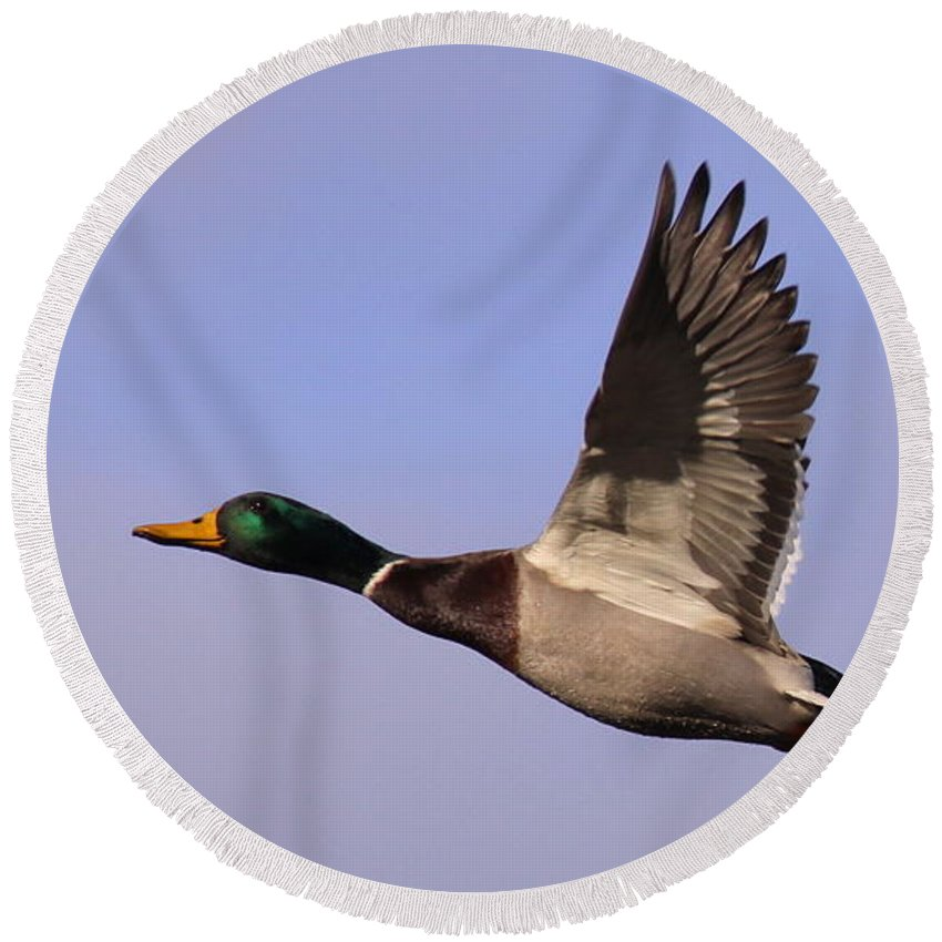 Round Beach Towel featuring the photograph I Can Fly by Travis Truelove