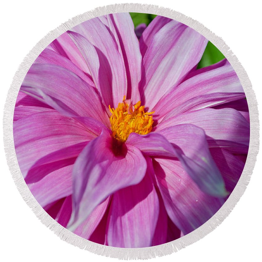 Ice Pink Round Beach Towel featuring the photograph Ice Pink Dahlia by Tikvah's Hope