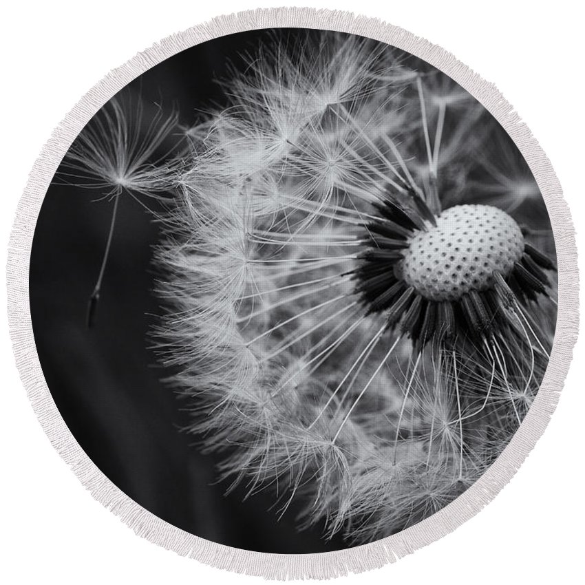 Dandelion Round Beach Towel featuring the photograph If Only Wishes Came True by Susan Capuano