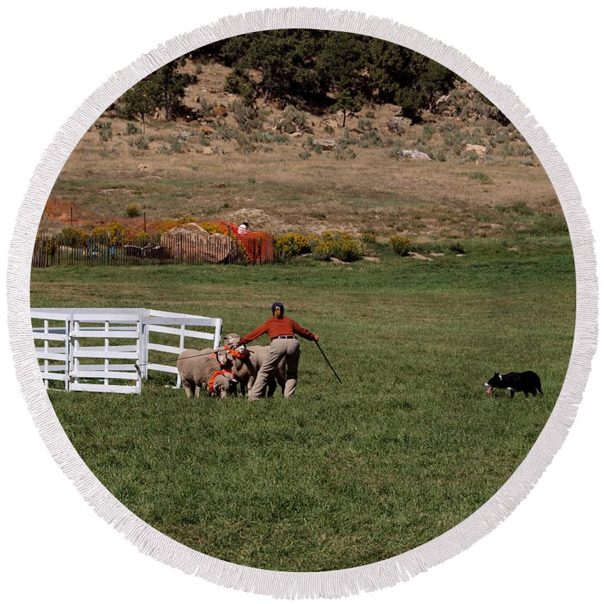 Sheep Round Beach Towel featuring the photograph Into The Paddock by Joshua House