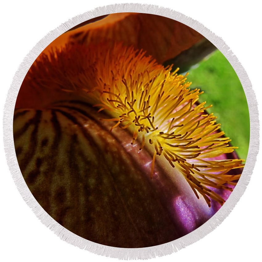 Nature Round Beach Towel featuring the photograph Iris Stamen Macro by Debbie Portwood