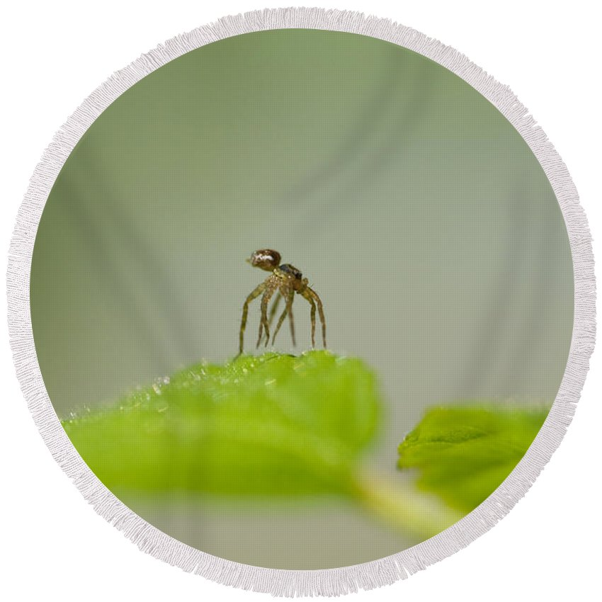 Spider Round Beach Towel featuring the photograph Itsy Bitsy Spider by Kathy Clark