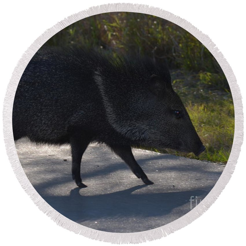 Javelina Round Beach Towel featuring the photograph Javelina by Donna Brown