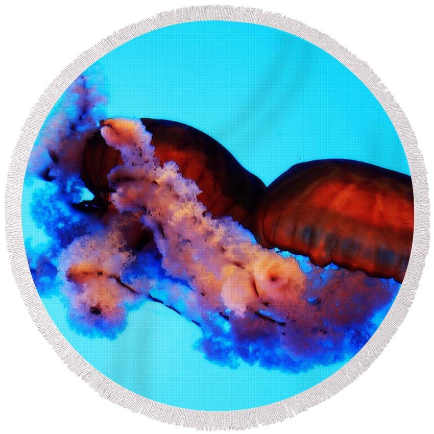 Jellyfish Round Beach Towel featuring the photograph Jellyfish Drama - Digital Art by Carol Groenen