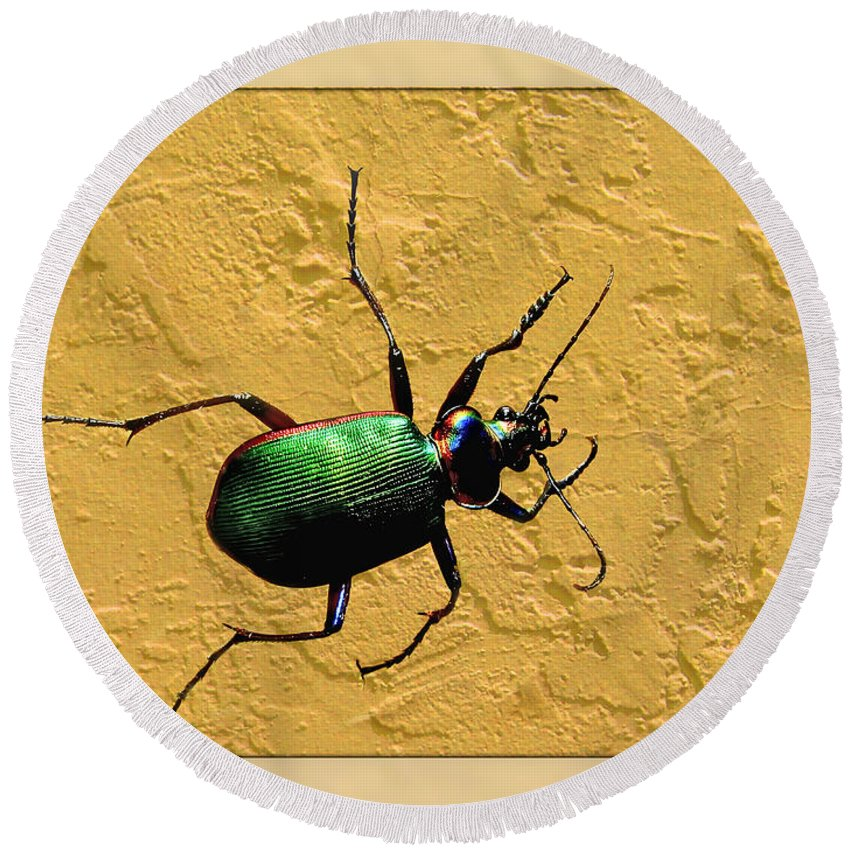 Nature Round Beach Towel featuring the photograph Jeweltone Beetle by Debbie Portwood