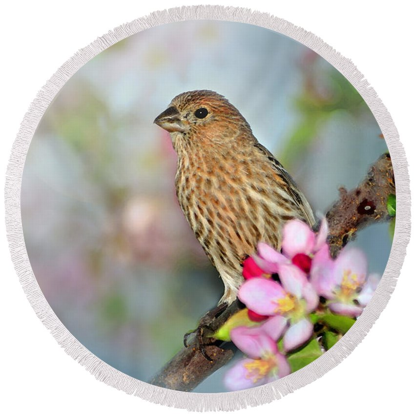 House Finch Round Beach Towel featuring the photograph Joy Of Spring by Betty LaRue