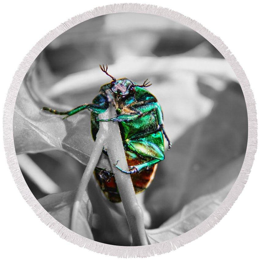 Junebug Round Beach Towel featuring the photograph Junebug by Mariola Bitner