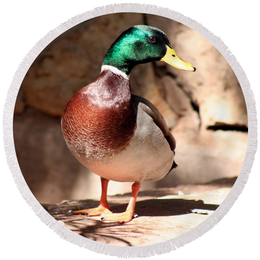 Wild Duck Round Beach Towel featuring the photograph Just Ducky by Alycia Christine