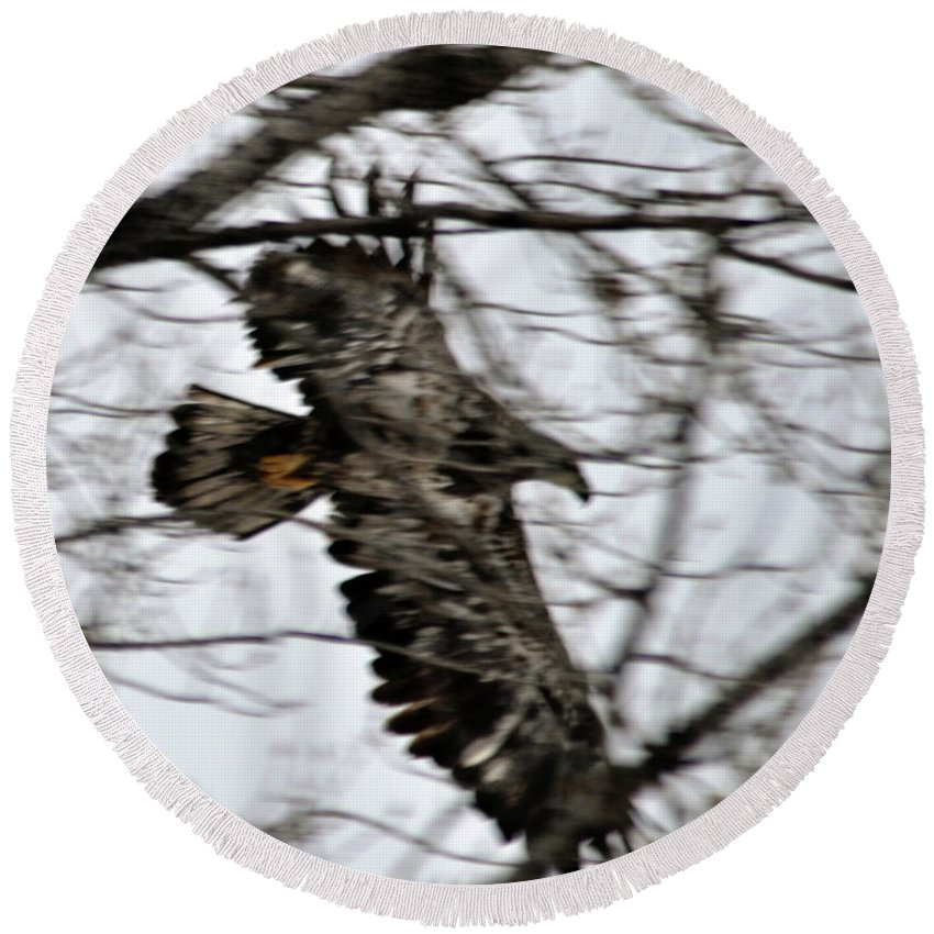Eagle Round Beach Towel featuring the photograph Juvenile Bold Eagle by Ronald Grogan