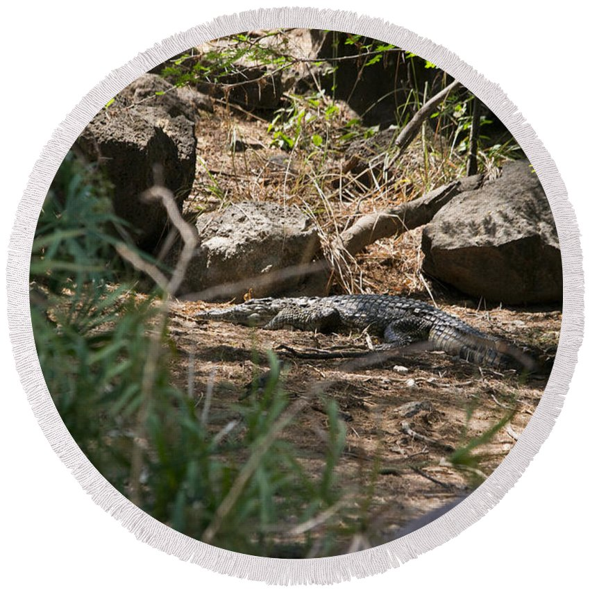 Africa Round Beach Towel featuring the photograph Juvenile Nile Crocodile by Howard Kennedy