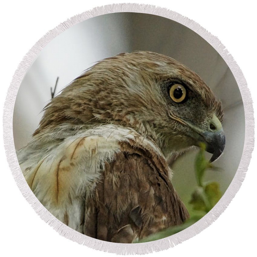 Hawk Round Beach Towel featuring the photograph Keeping An Eye On You by Alan Hutchins