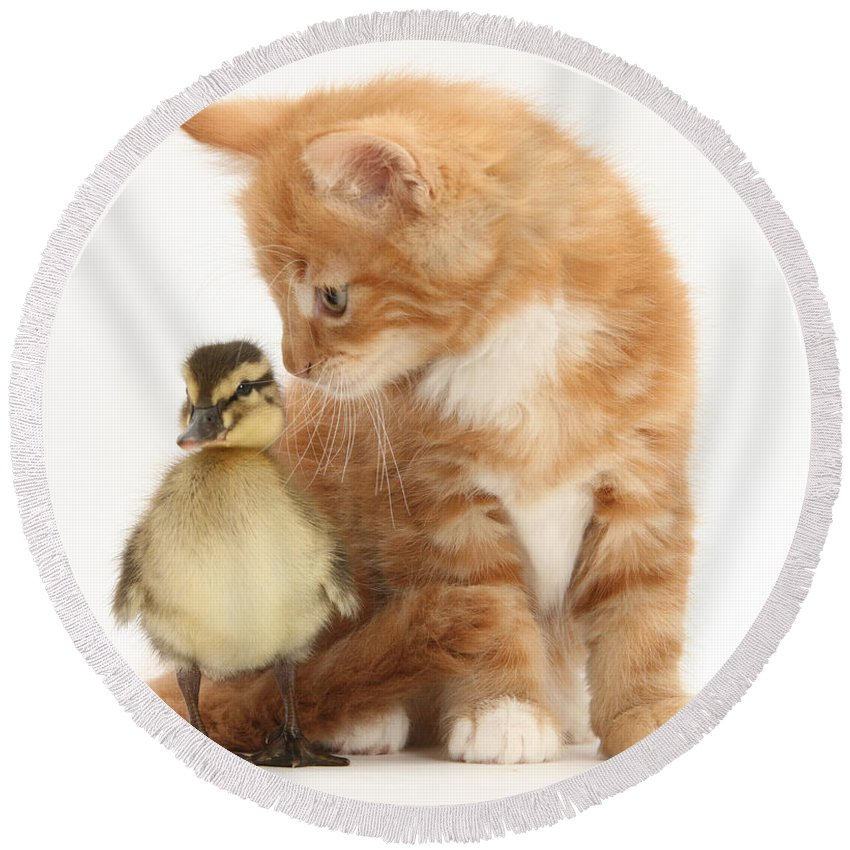 Animal Round Beach Towel featuring the photograph Kitten And Duckling by Mark Taylor