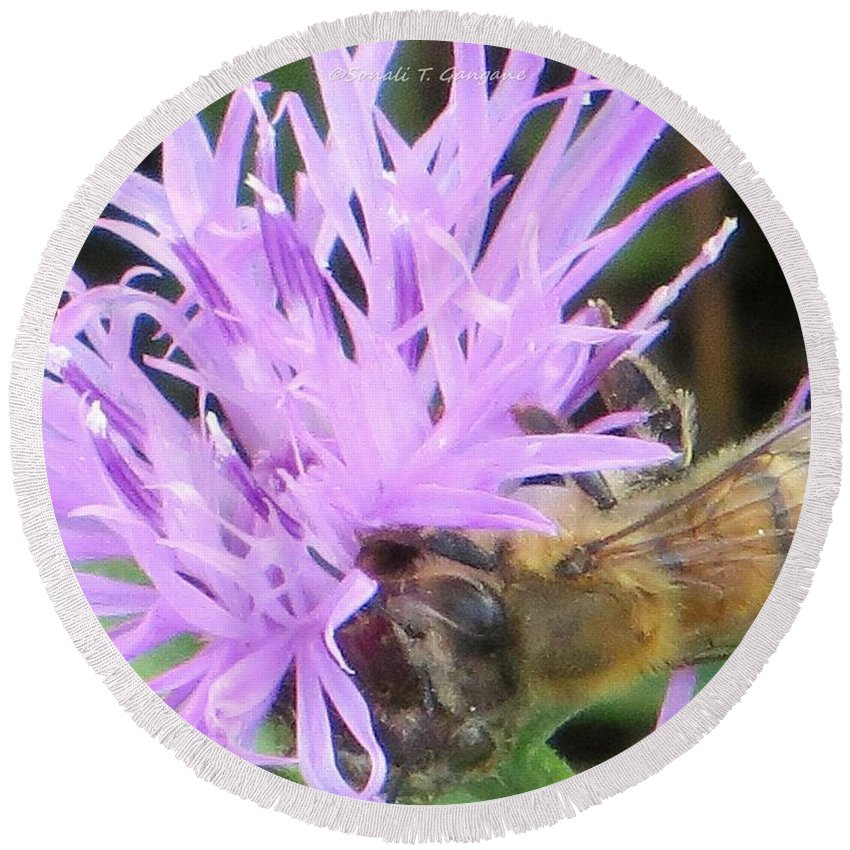 Buzz Buzz Bee Round Beach Towel featuring the photograph Lavendar Affection by Sonali Gangane