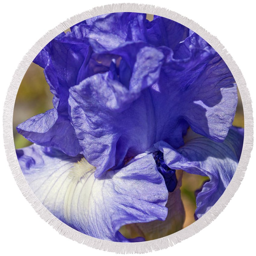 Flower Round Beach Towel featuring the photograph lavender Iris by Tikvah's Hope