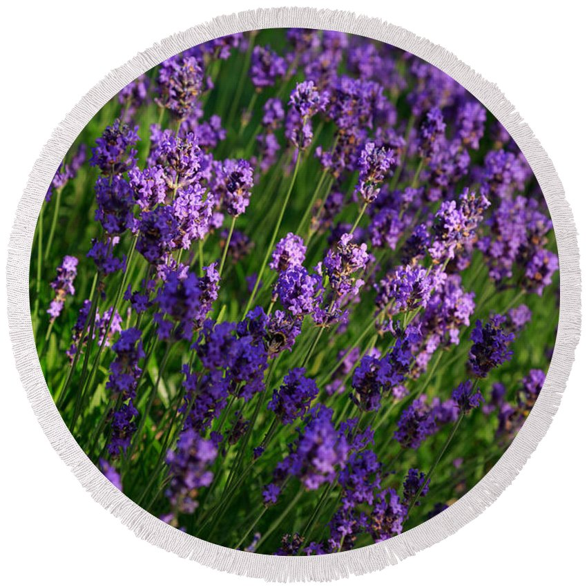 Lavender Round Beach Towel featuring the photograph Lavender by Louise Heusinkveld