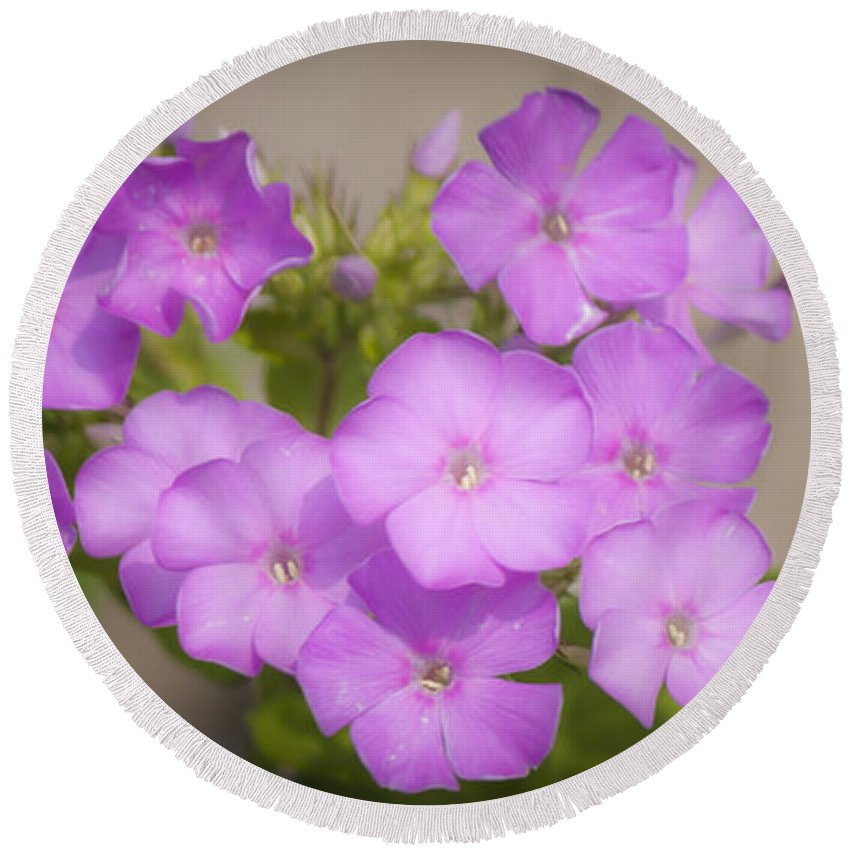 Phlox Round Beach Towel featuring the photograph Lavender Phlox by Teresa Mucha