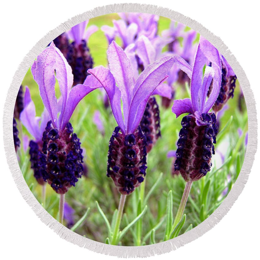 Beautiful Round Beach Towel featuring the photograph Lavenders by Les Cunliffe