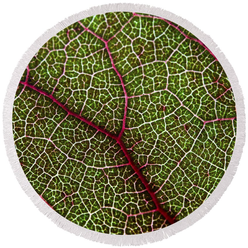 Macro Round Beach Towel featuring the photograph Leaf by Fabrizio Troiani