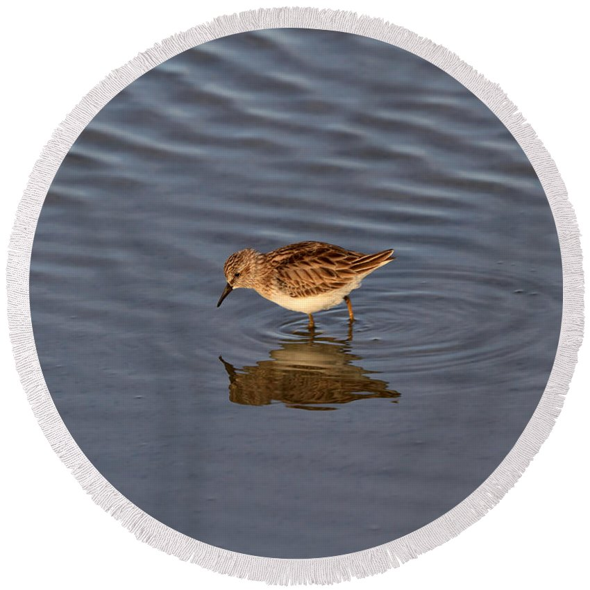 Sandpiper Round Beach Towel featuring the photograph Least Sandpiper by Louise Heusinkveld