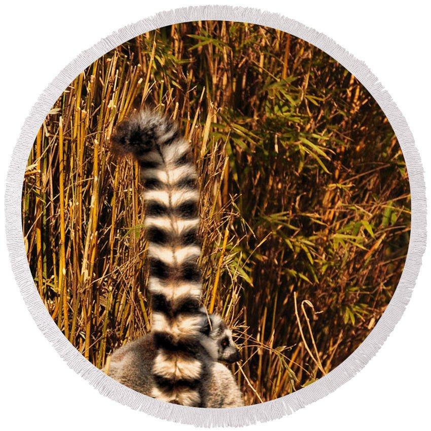 Lemur Round Beach Towel featuring the photograph Lemur Tail by Susan Cliett