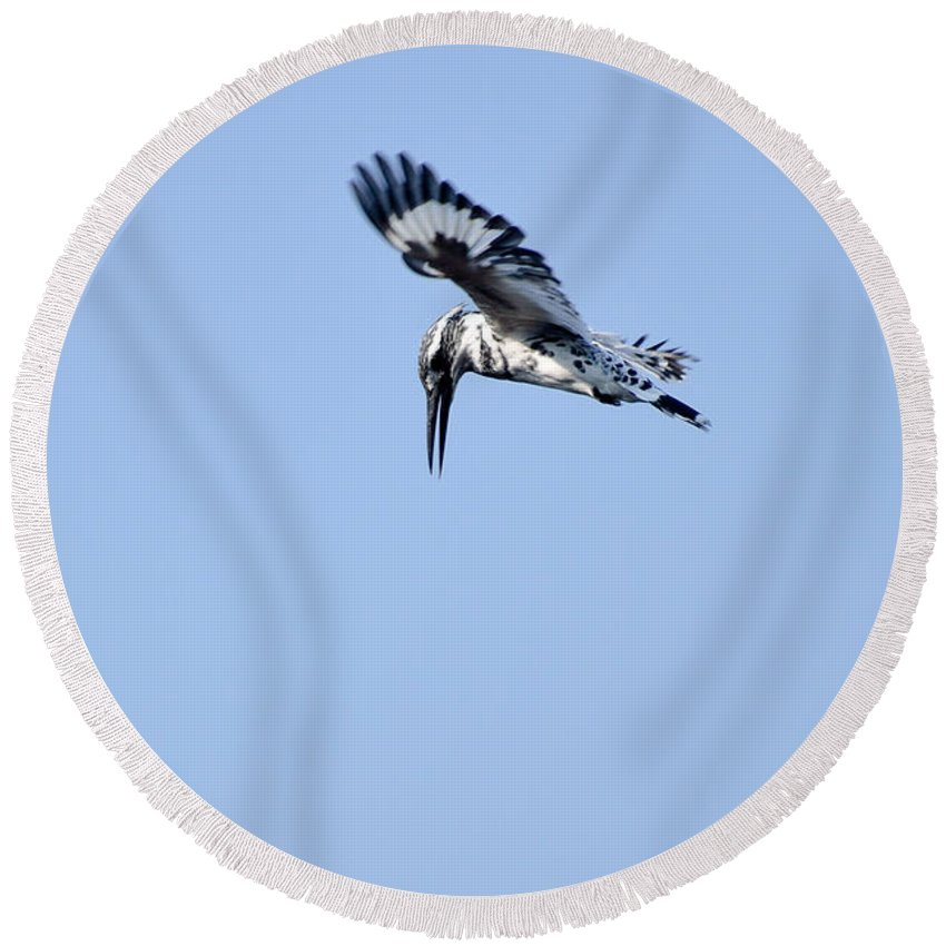 2830 Round Beach Towel featuring the photograph Lesser Pied Kingfisher by Fotosas Photography