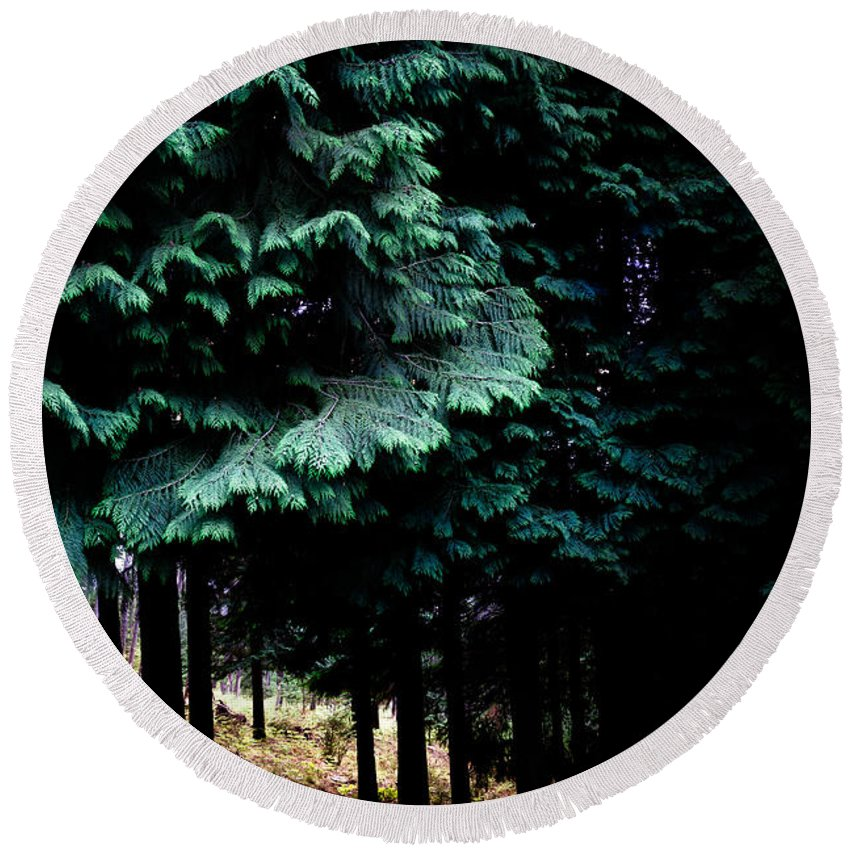 Light Round Beach Towel featuring the photograph Light Forest by Edgar Laureano