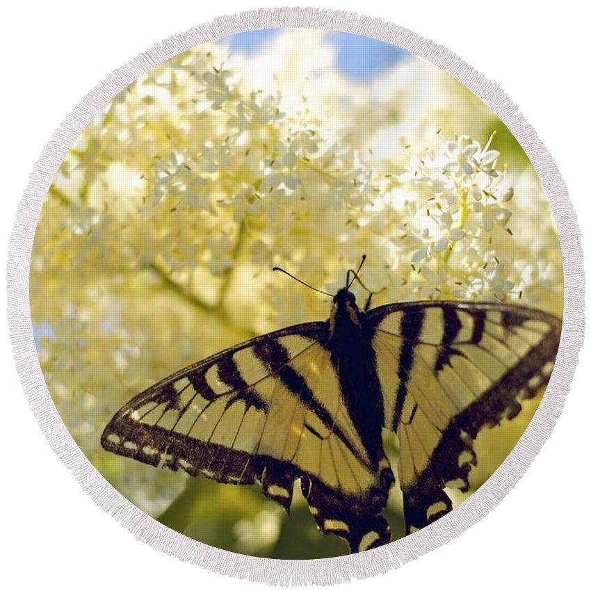 Butterfly Round Beach Towel featuring the photograph Swallowtail Lilac Spring Photo by Alanna DPhoto