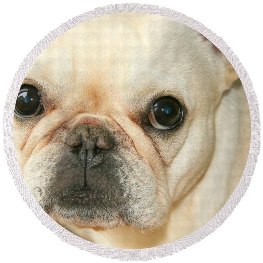 French Bulldog Round Beach Towel featuring the photograph Listening by Tap On Photo