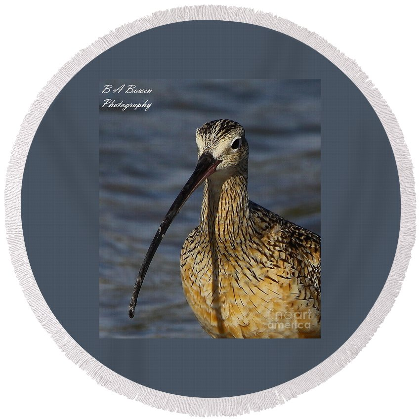 Long-billed Curlew Round Beach Towel featuring the photograph Long-billed Curlew Portrait by Barbara Bowen