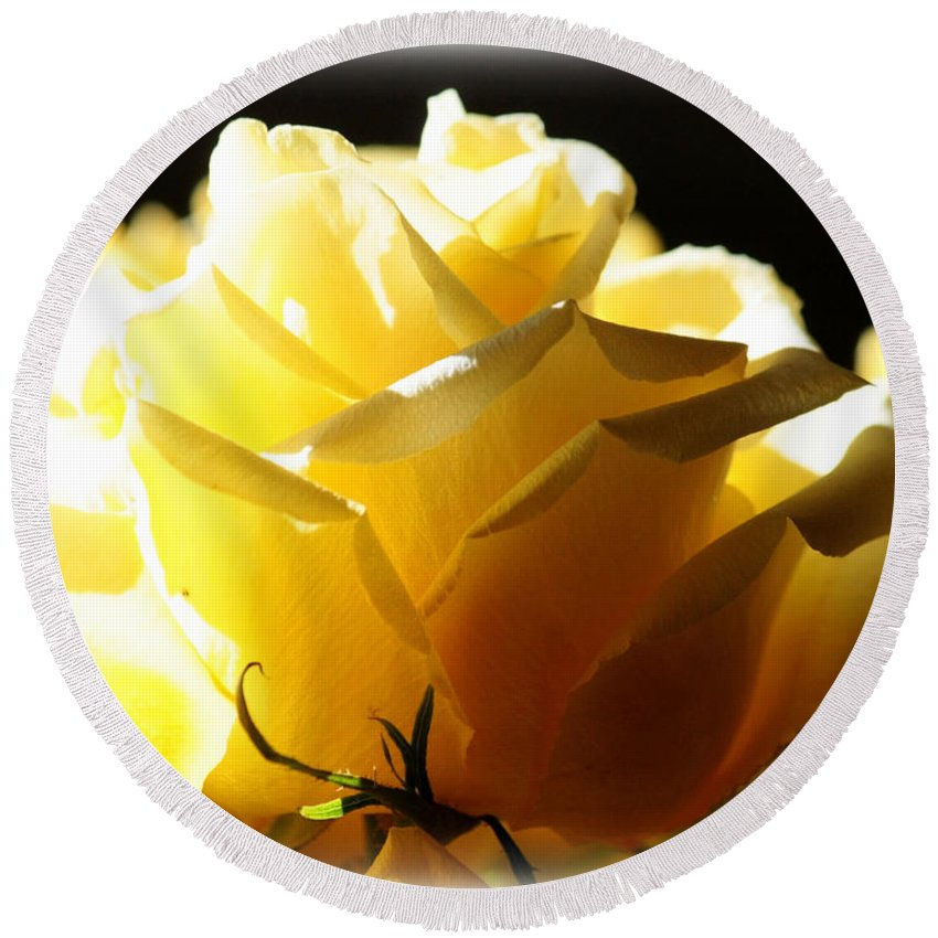 Yellow Rose Round Beach Towel featuring the photograph Look On The Bright Side by Carol Groenen