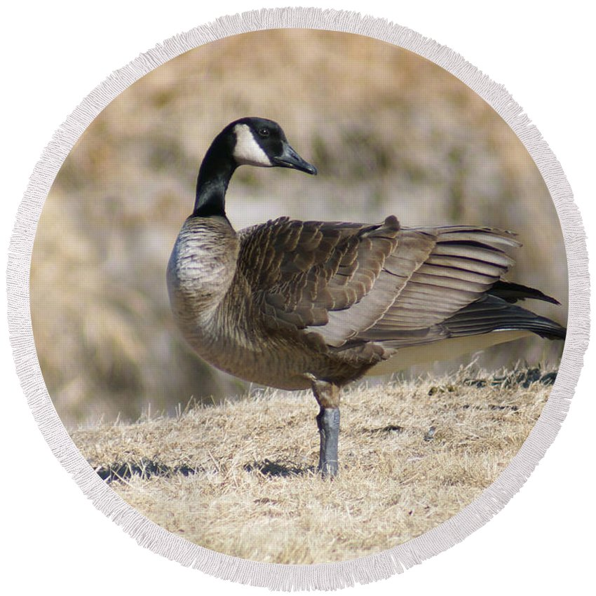 Goose Round Beach Towel featuring the photograph Looking Back by Lori Tordsen