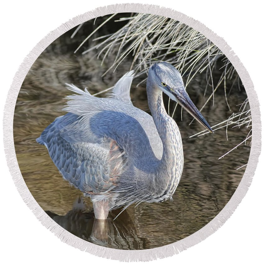 Blue Heron Round Beach Towel featuring the photograph Looking For Those Fish by Deborah Benoit