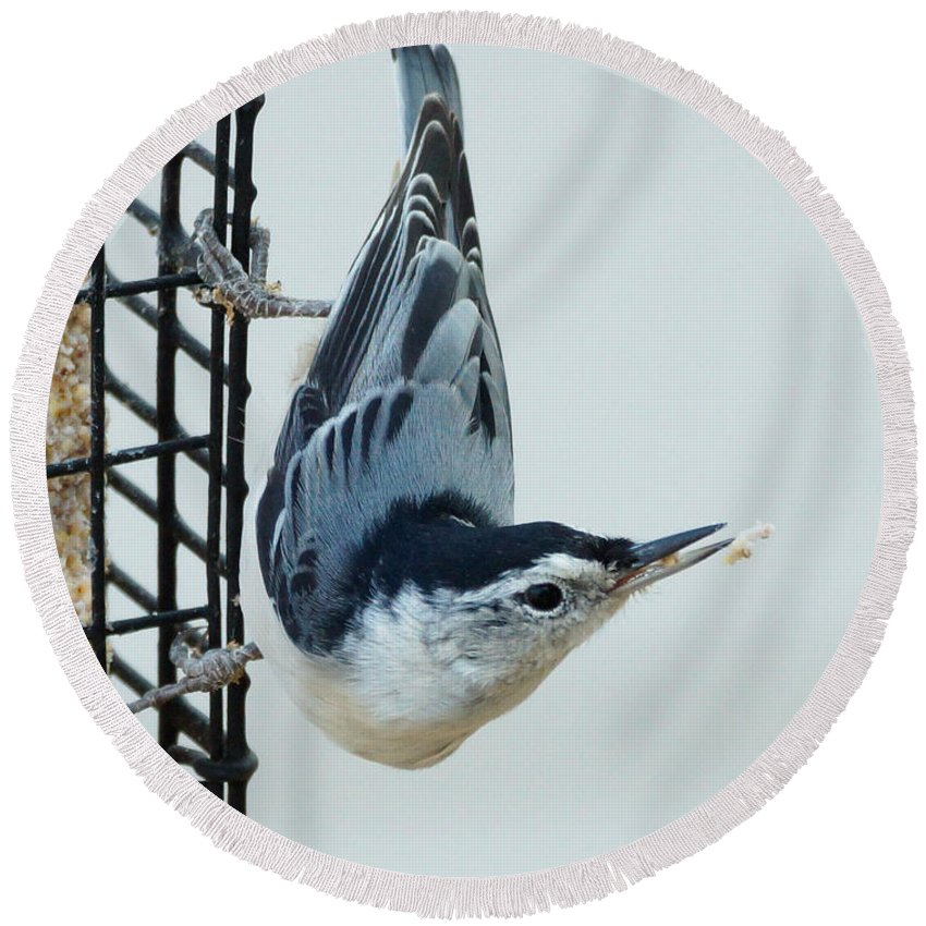 Birds Round Beach Towel featuring the photograph Lost Food by Lori Tordsen