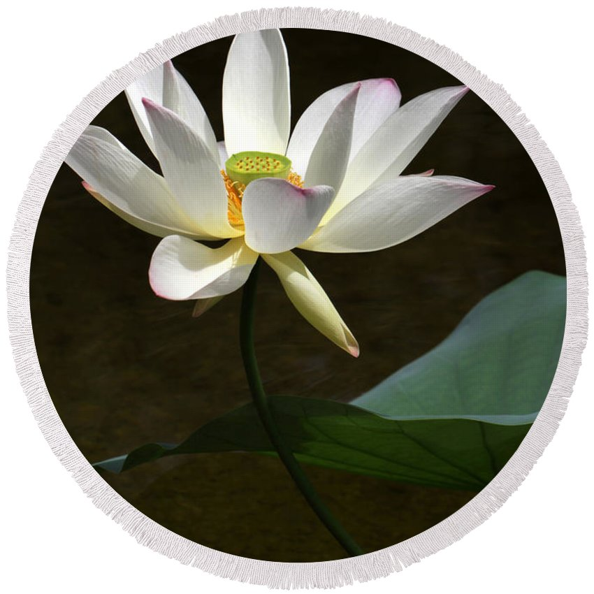Lotus Round Beach Towel featuring the photograph Lotus Beauty by Sabrina L Ryan