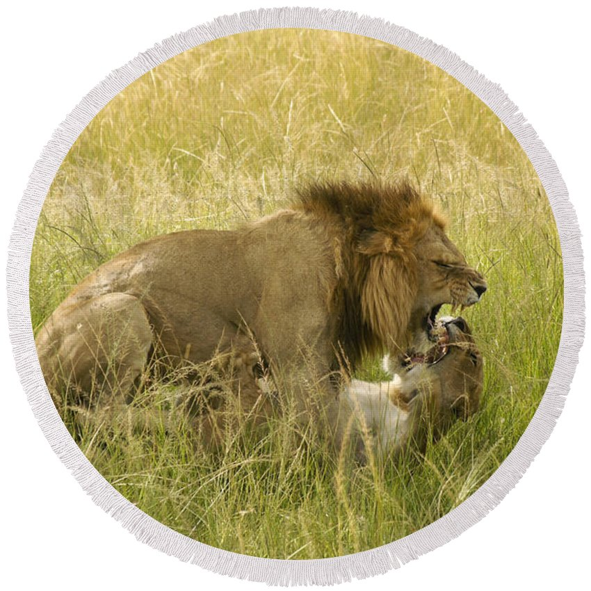 Africa Round Beach Towel featuring the photograph Love In The Wild by Michele Burgess