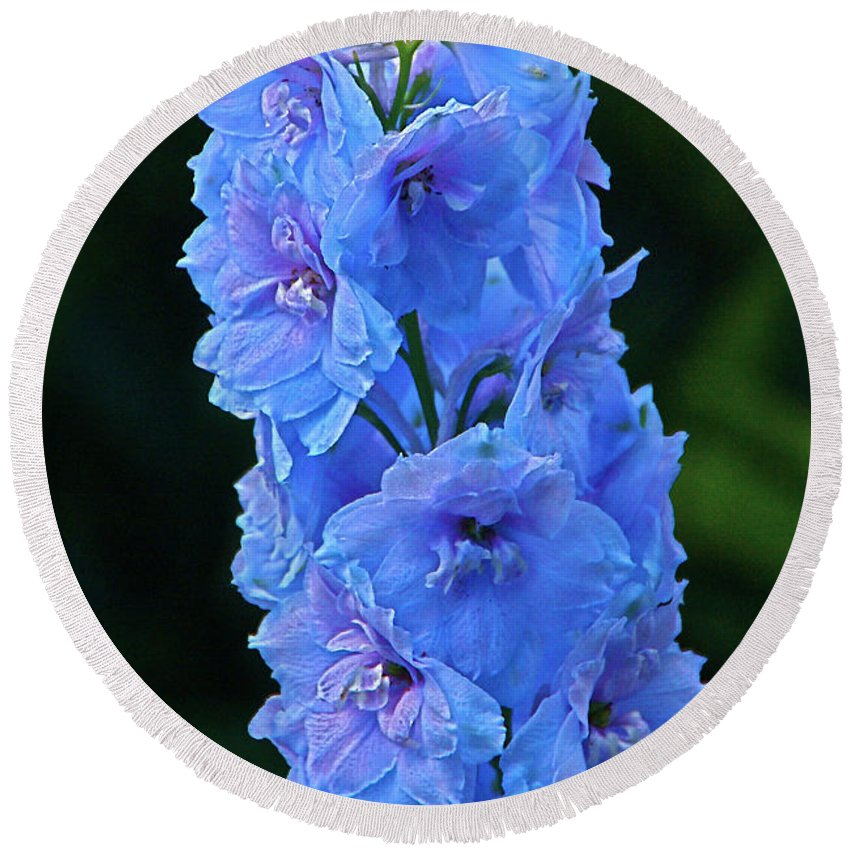 Larkspur Round Beach Towel featuring the photograph Lovely Larkspur Blue by Byron Varvarigos
