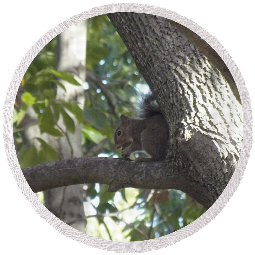 Squirrel Round Beach Towel featuring the photograph Lunch Time by Bonfire Photography