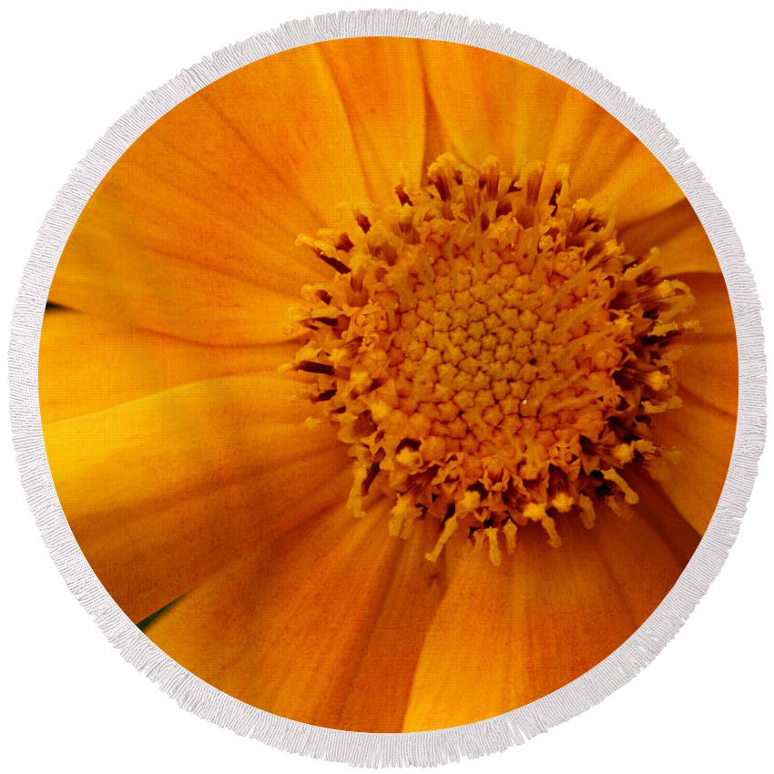 Flower Round Beach Towel featuring the photograph Macro Flower by Smilin Eyes Treasures